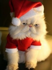 Fluffy says: Welcome to the Mamamia Christmas Gift Guide.