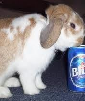 """""""I think maybe the Easter Bunny had few too many beers."""""""