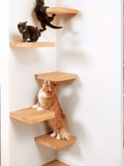crazy pet furniture