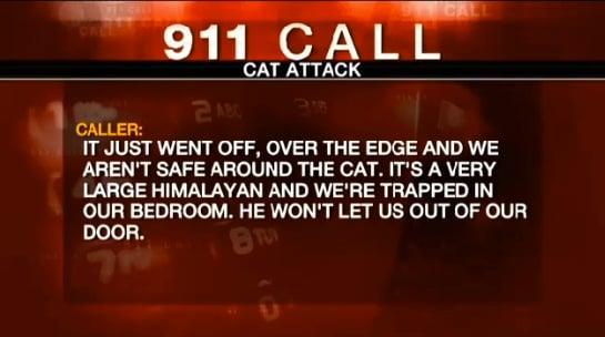 cat-911-call