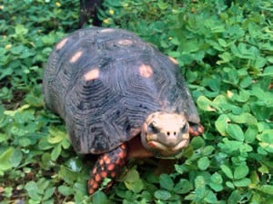 Turtle found alive after thirty years
