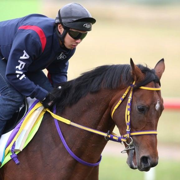 Melbourne Cup horse Admire Ratki dead
