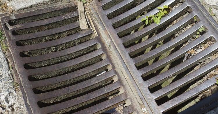 baby found in a drain in sydney