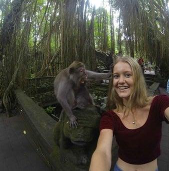 monkey-selfie-1