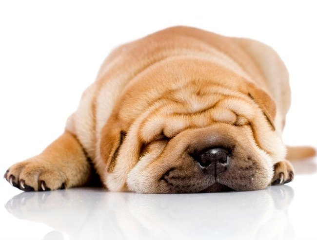 sharpei_featuresize