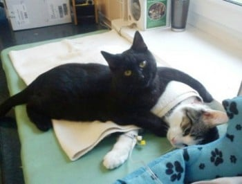 Meet the Polish cat-nurse who cuddles sick animal friends.