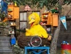 big bird feature