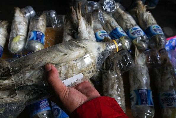 cockatoos in bottles