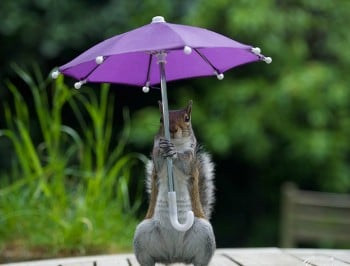 squirrel with umbrella 5 feat