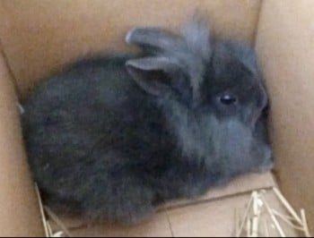 "Radio station bludgeons baby rabbit to death live on air with a bike pump to ""spark debate""."
