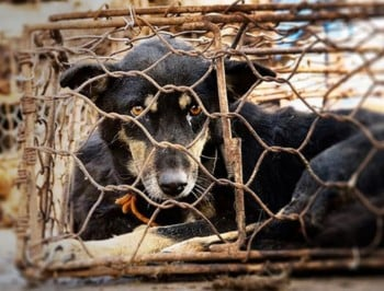 StopYulinFeature