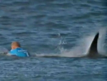 mick fanning shark feature