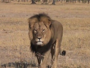 A celebrity paid thousands to kill a lion like Cecil. But he had no idea what effect it would have.