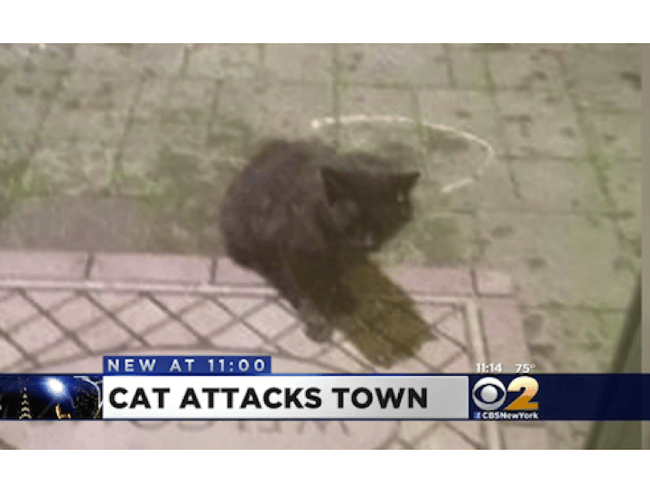 A violent, clearly criminal cat is driving people from their homes in terror.