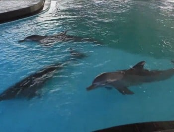 This Bali resort is keeping dolphins in a swimming pool so tourists can get kicks from swimming with them.