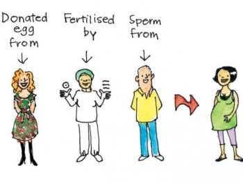 How babies are made: cartoonist Fiona Katauskas explains the birds and the bees.