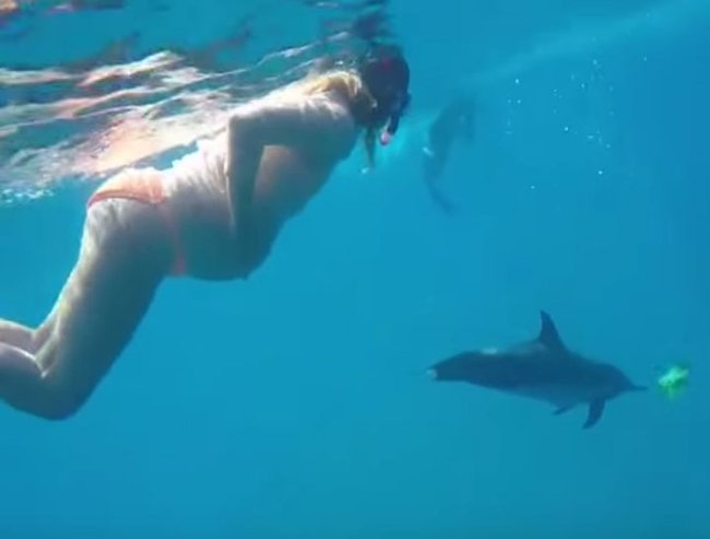 dolphin-assisted births