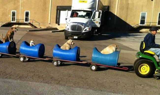 Texas dog train