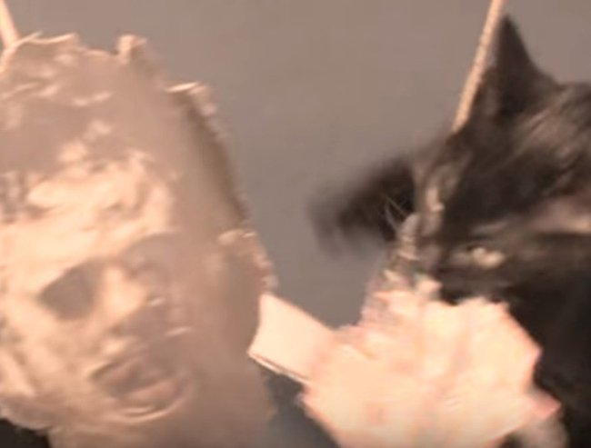 Kittens reenact horror movies