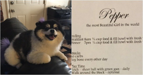 Tommy agreed to babysit his aunt's dog. She arrived with a two-page set of instructions.