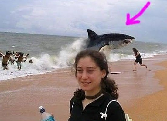 Proof that animal photobombs have not yet jumped the shark.