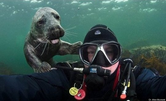 More underwater photobombs. This seal is too cute.