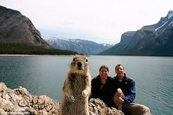 One of the most famous animal photobombs - tourists in Canada prepared a self-timer shot with unexpected results.