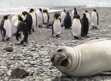 This photobomb gets our seal of approval.