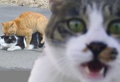 We don't know which is funnier - the alarmed cat in the foreground, or the X-rated activity behind it...