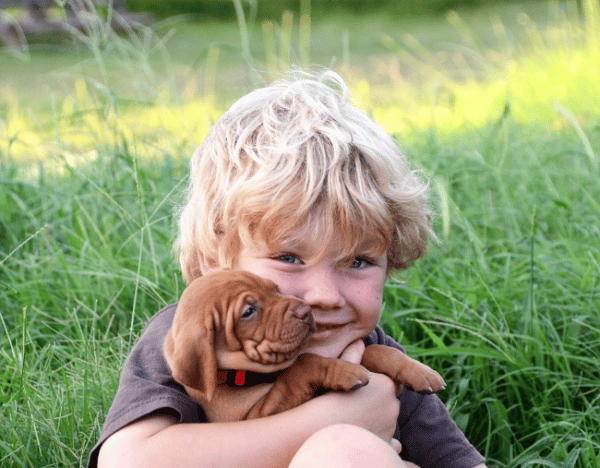 My child killed our puppy