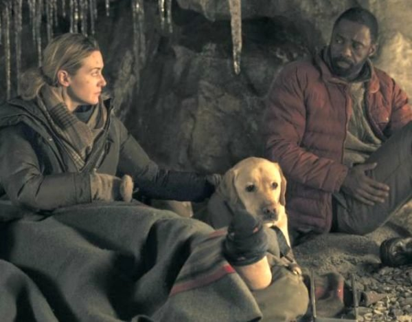 the mountain between us dog