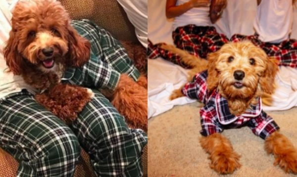 The matching pajamas sets for dogs and their humans