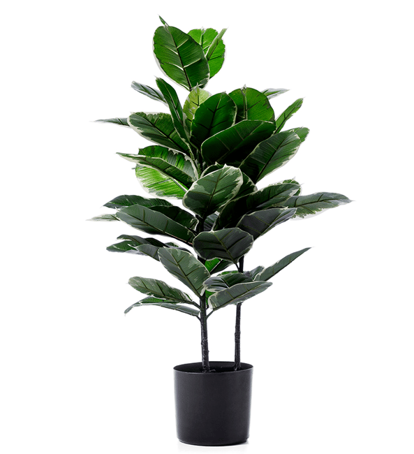 in defence of fake plants here are the best fake plants that look pretty real. Black Bedroom Furniture Sets. Home Design Ideas