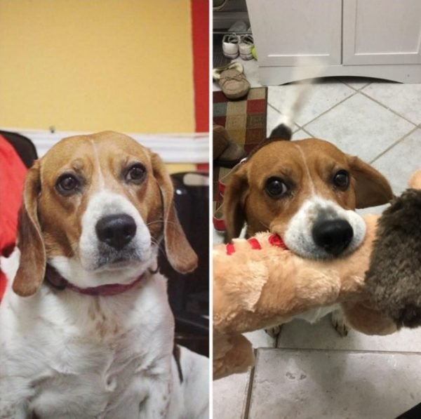 Reddit before & after dog