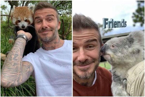David Beckham animals