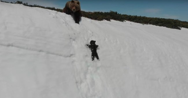 Creating Viral Social Content Was At The Black Heart Of: The Sad Reality Behind The Baby Bear Climbing Snow Viral