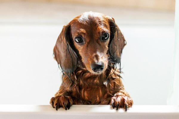 How often should you wash your dog? Almost never, say vets.