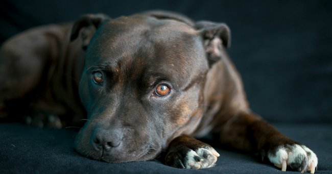 Does Your Dog Bite The Breeds More Likely To Bite Than