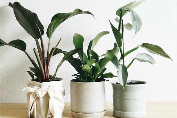 ASK A PLANT EXPERT: What are the best indoor plants for apartments without much light?