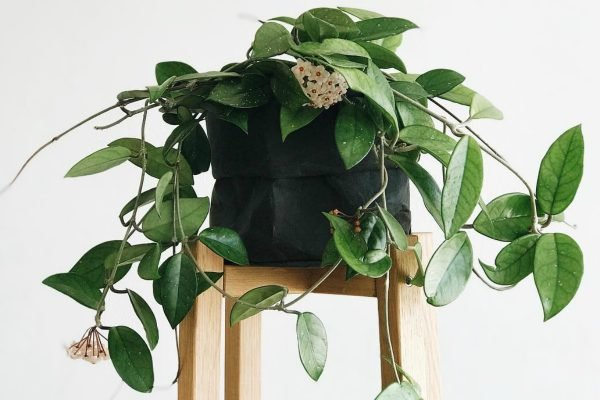 ASK A PLANT EXPERT: What are the safest plants to have around cats and dogs?
