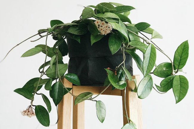 What Plants Are Safe For Cats The Pet Safe Plants Every Owner Needs