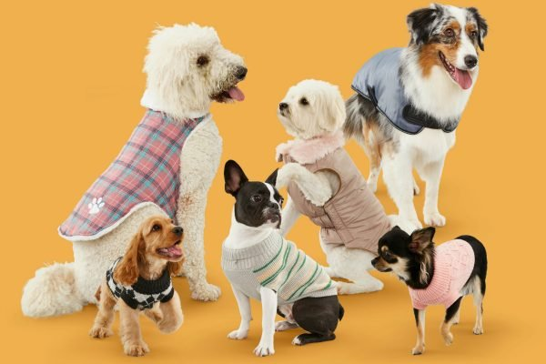 A notice for fur parents: BIG W is selling $8 dog sweaters because of course they get cold.