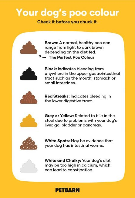All About Dog Poo And Cat Poo What The Perfect Pet Poo
