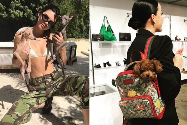 Just 7 celebrity dog Instagram accounts you really should be following.