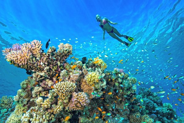 Yes, some sunscreens are harming our reefs, so here's what you need to look out for.