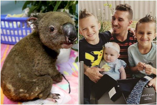 Koalas, Luke Toki and Egg Boi: The causes Australians donated the most money to in 2019.