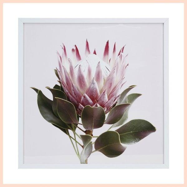 Protea-print-framed